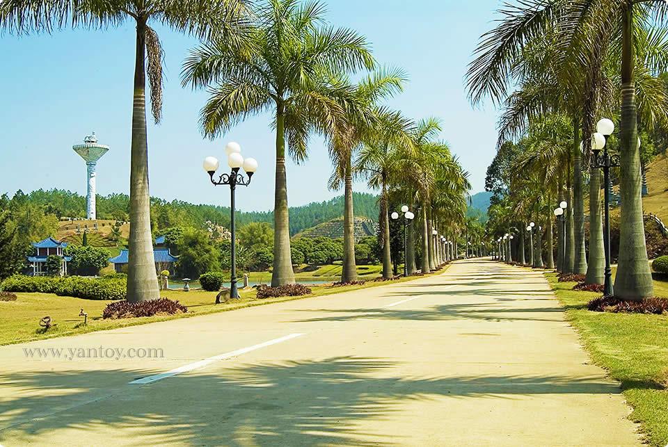 幽静的椰林大道