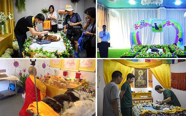 宠物的葬礼 设灵堂 整容 超度