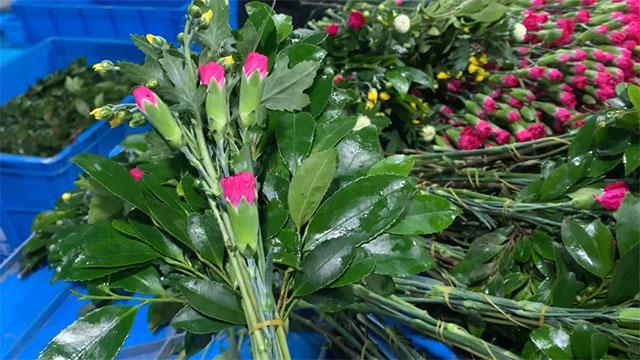 4▲海丰花卉出口到日本的佛花