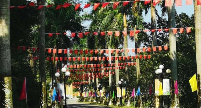 园区椰林大道迎国庆